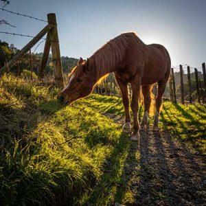 Lush-Pasture
