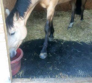 Mayo Horse Comfort