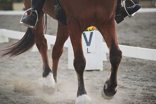 Tips for Dressage Score