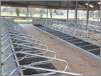 Mayo Cow Comfort Mayo Farm Systems