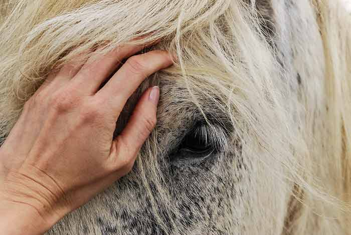 Equine Therapy Love