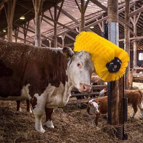 EasySwing Maxi Cow Brush