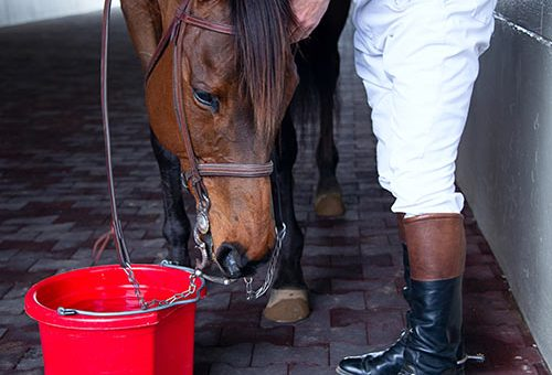 Horse drinking water from a bucket