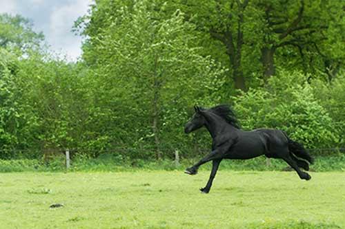 Equine Films