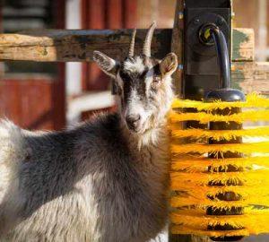 Easyswing mini brush goat