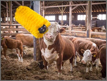 EasySwing Cow Brush