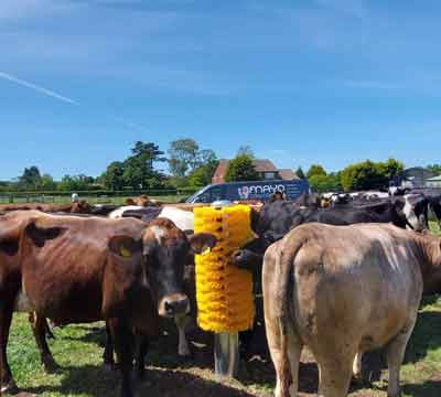 Easyswing Totem Brush for cows