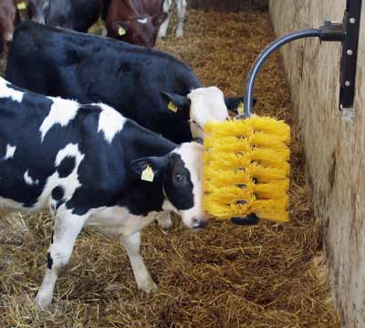 EasySwing Midi Cow Brush