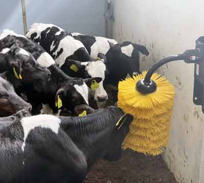 Cow Brushes