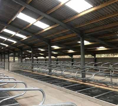 Mayo Original cow beds